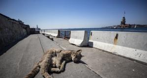 İstanbul'da sokağa çıkma yasağı