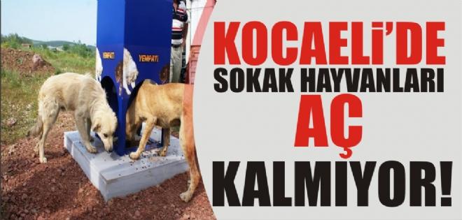 Kavurucu sıcaklarda sokak hayvanları aç ve susuz kalmıyor