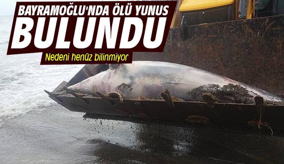 Bayramoğlu'nda ölü yunus bulundu