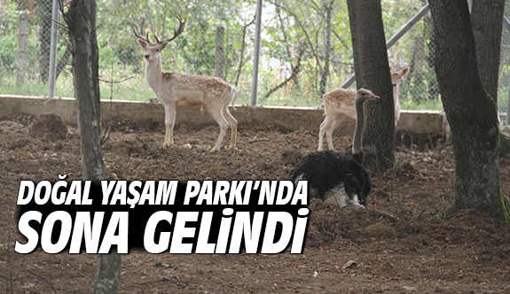 Doğal Yaşam Parkı'nda sona gelindi