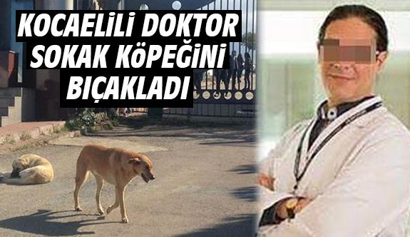 Kocaelili doktor sokak köpeğini bıçakladı