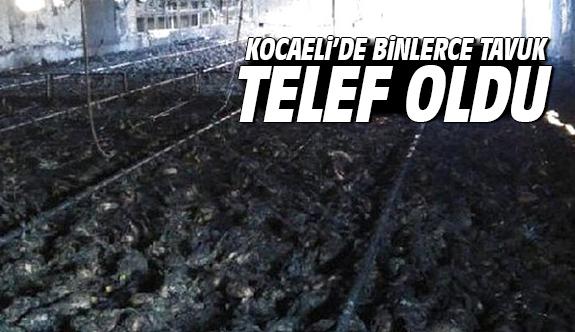 Kocaeli'de 21 bin tavuk yandı