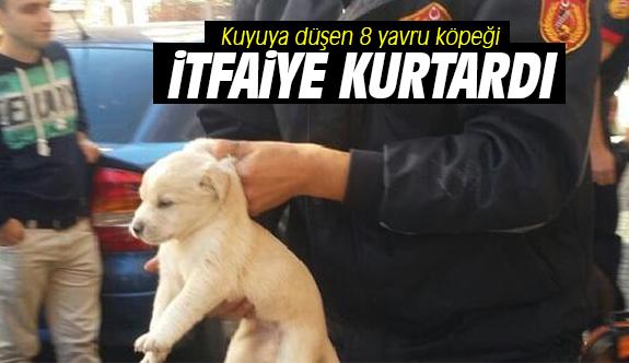 Kuyuya düşen 8 yavru köpeği itfaiye kurtardı