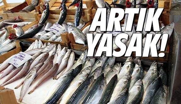 Balıkçılara yasak geldi... Avlamak-satmak YASAK!