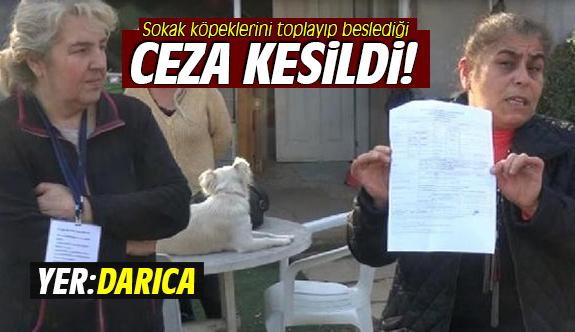 Sokak köpeklerini toplayarak beslemesi nedeniyle ceza kesildi