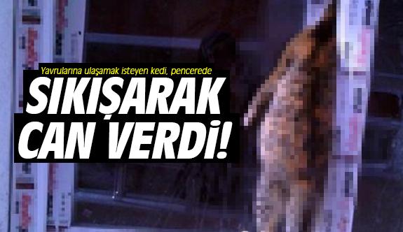 Yavrularına ulaşmak isteyen kedi, pencerede sıkışarak boğuldu