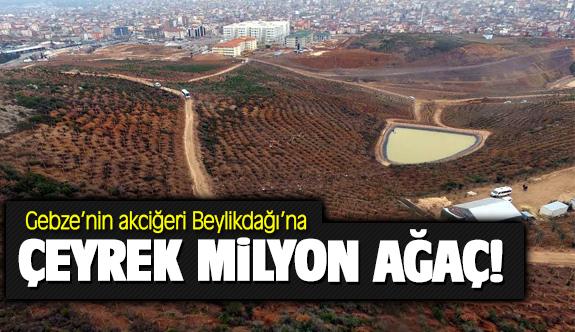 Gebze'ye çeyrek milyon ağaç