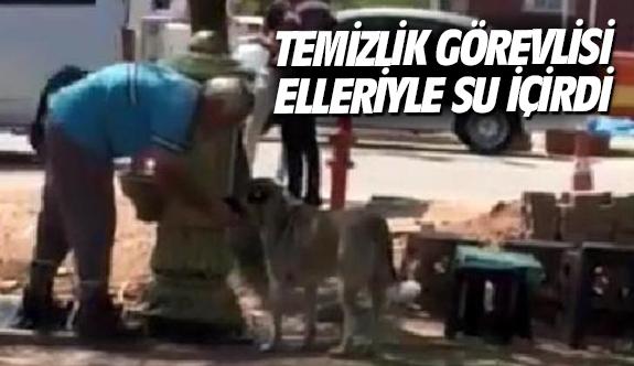 Temizlik görevlisi köpeğe elleriyle su içirdi