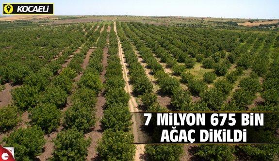 13 yılda 7 milyon 675 bin 276 adet ağaç dikildi