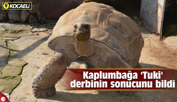 Kaplumbağa 'Tuki' derbinin sonucunu bildi