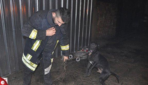 İşyeri yanan işletmeci itfaiyecilerle birlikte köpeğini kurtardı