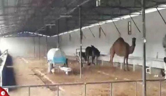Tefeciler, veterinerin devesine el koymuş, ölen kişinin adına şirket kurmuş