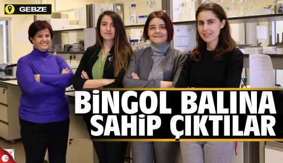 GTÜ Bingöl balına sahip çıktı