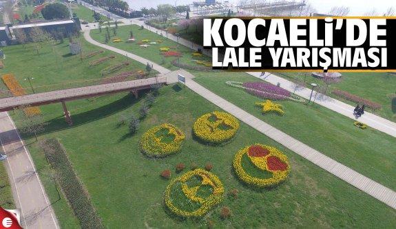 Kocaeli'de lale festivali