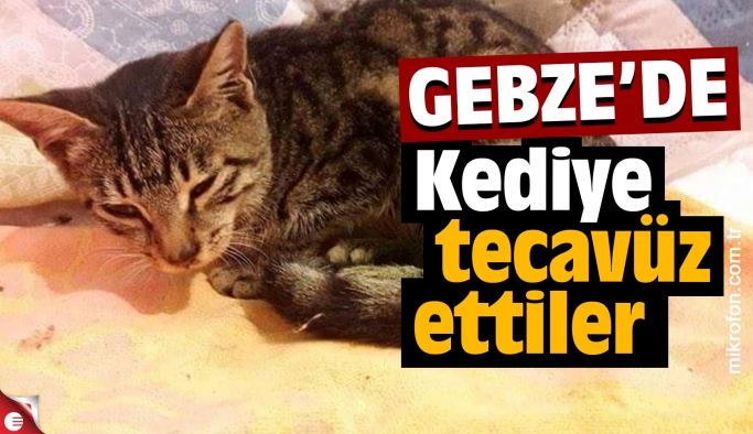 Gebze'de kediye tecavüz ettiler