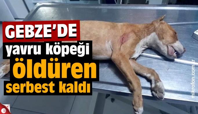 Yavru köpeği öldüren serbest kaldı