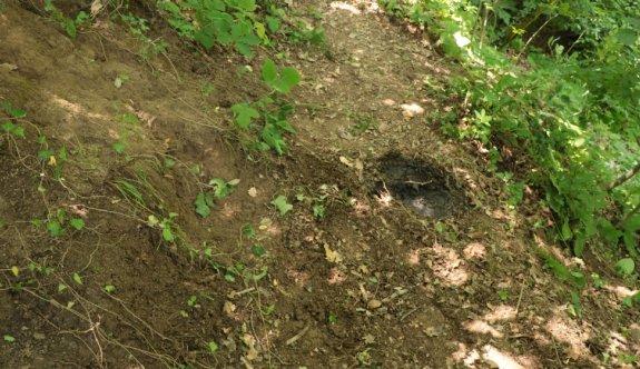 Yalova'da ormanda cesedi bulunan kişinin ev arkadaşı tutuklandı