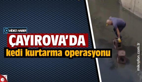 Çayırova'da kanalizasyonda mahsur kalan yavru kedi tabureler yardımıyla kurtarıldı