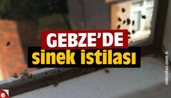 Gebze'de sinek istilası!