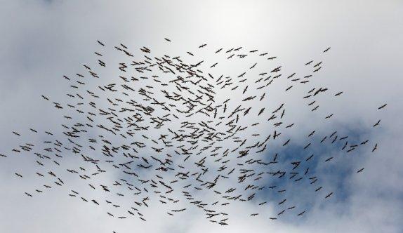 Kırklareli'nde yüzlerce leyleğin göç yolculuğu görsel şölen oluşturdu