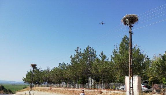 Trakya'da leylek yuvalarının bakımı drone yardımıyla yapılıyor