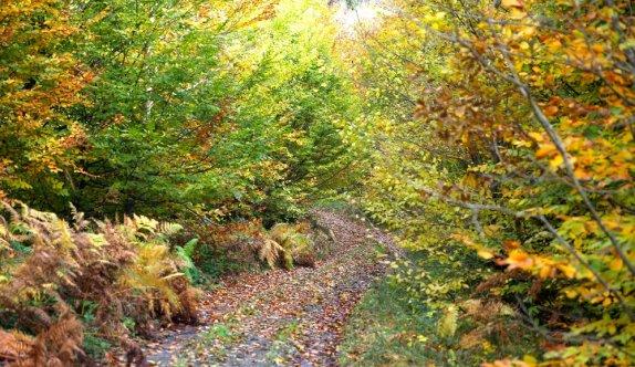Sakarya'da sonbahar güzelliği yaşanıyor