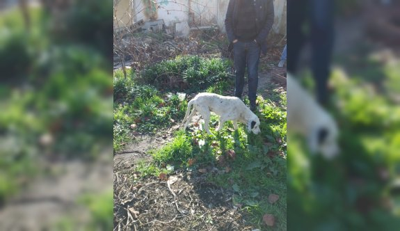 Lüleburgaz'da foseptik çukuruna düşen köpek kurtarıldı