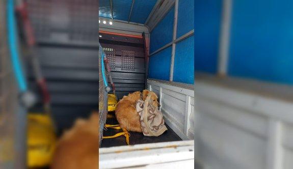 Sakarya'da tüfekle vurulan köpek tedavi edildi