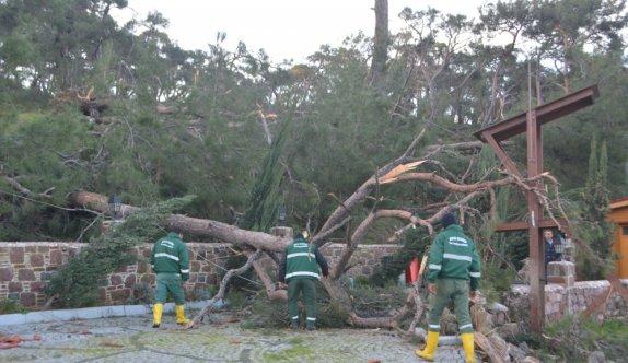 Ayvalık'taki hortum, dolu ve şiddetli yağıştan zarar görenler için 204 bin lira yardım ödeneği tahsis edildi
