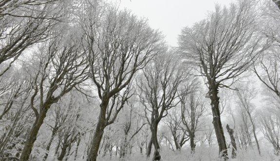 Buzla kaplanan Istranca Ormanları'ndaki ağaçlar güzel görüntüler oluşturdu