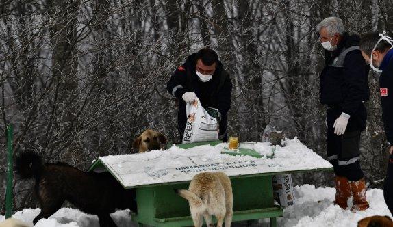 Karla kaplı Uludağ'daki sokak hayvanları besleniyor