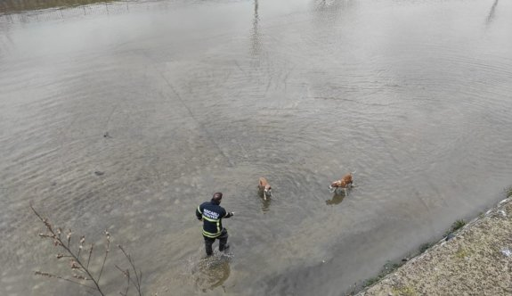 Kocaeli'de dereye düşen 2 köpek kurtarıldı