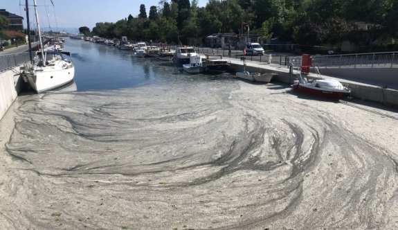 Anadolu Yakası'nda müsilaj birikmeleri görülmeye devam ediyor