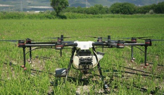 Bursa'da çeltik tarlaları drone ile ilaçlanıyor