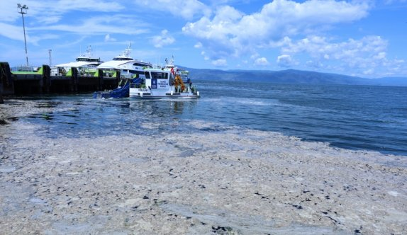 Marmara Denizi'nden temizlenecek deniz salyasının tarımdaki kullanım alanları araştırılıyor