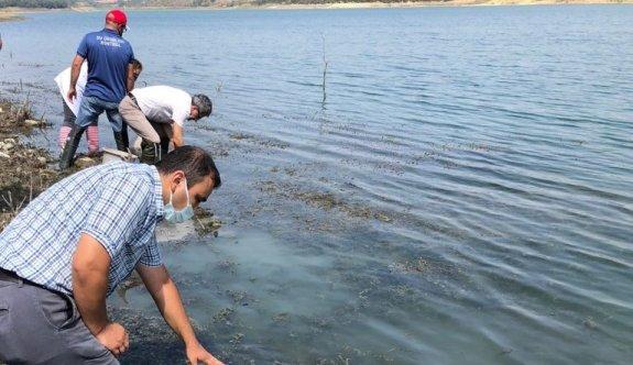 Tekirdağ'da göletlere 407 bin yavru sazan bırakıldı