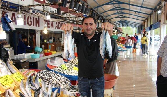 Bandırma Su Ürünleri Hali'nde balık bolluğu yaşanıyor