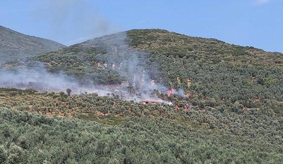 Bursa'da zeytinlik alanda çıkan yangın kontrol altına alındı