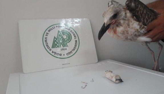 Çanakkale'de ağzından 3 balık kancası çıkarılan martı doğaya salındı