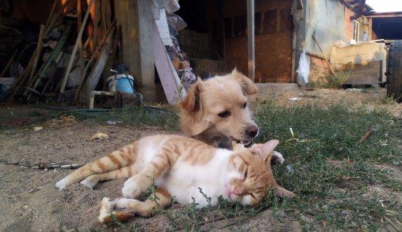 Edirne'de bir çiftlikte yaşayan kedi ve köpeğin dostluğu görenleri şaşırtıyor