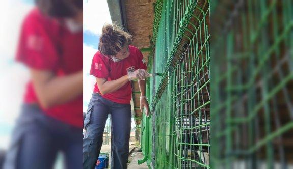Bursa'da arama kurtarma ekibi ve hayvanseverler barınakta tadilat yaptı