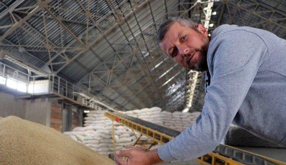 Edirne'de çeltik üreticileri ürünlerini TMO'ya getirmeye başladı