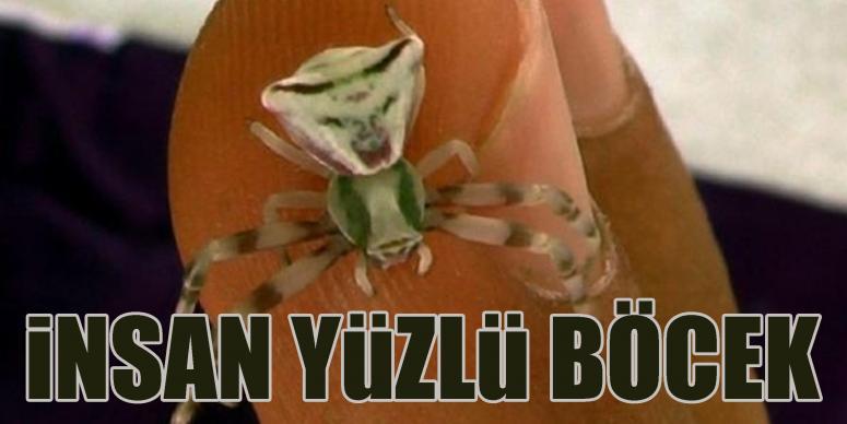 Osmaniye'de insan yüzlü örümcek