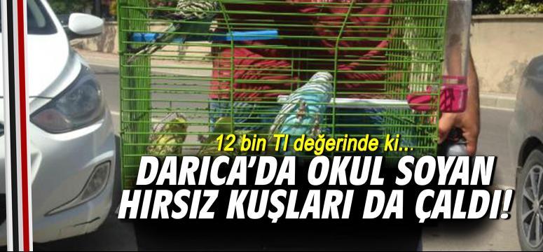 Darıca'da Okul Soyan Hırsız Kuşları Da Çaldı!