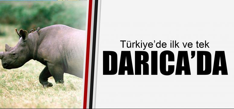 Türkiye'de ilk ve tek Darıca'da