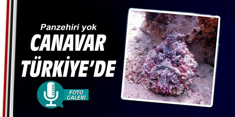 Canavar Türkiye'de