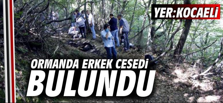 Kocaeli'de ormanda şüpheli ölüm