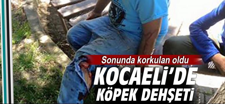 Kocaeli'de köpek dehşeti