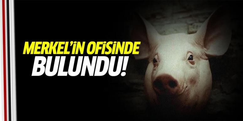 Merkel'in ofisine domuz başı!