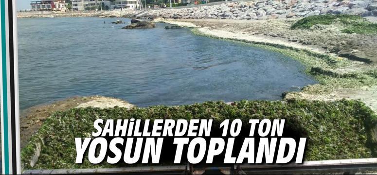Sahillerden 10 ton yosun toplandı